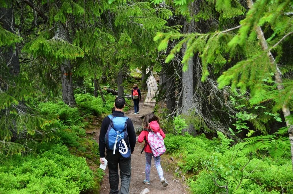 Wandelen in nationaal park Fulufjallet, Zweden