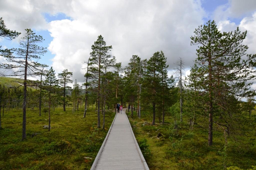 Nationaal park Fulufjallet in Dalarna, Zweden