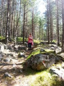 Boswandeling in Zweden