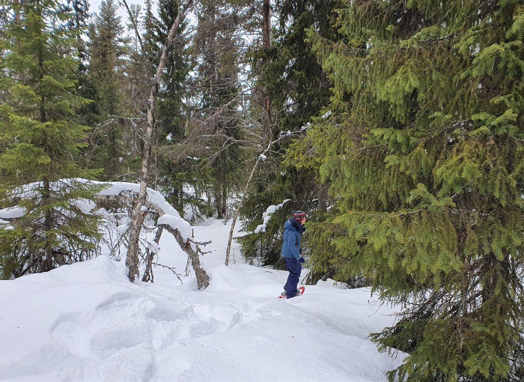 sneeuschoenwandelen in dalarna zweden